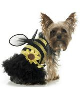 Костюм пчелки Dog