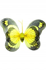 Крылья бабочки Махаона